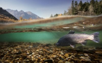 The Best Fish To Catch in Hells Canyon